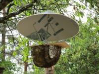 Bienen ohne Gehäuse im Freien, nur überdacht