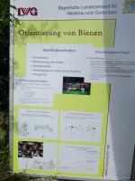 Demonstration zur Orientierung der Bienen mit Müller-Englert