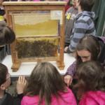 Bienenschaukasten