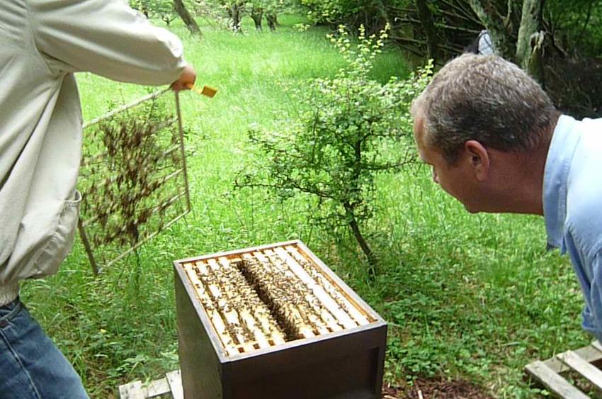 Öffnen der Bienenbeute