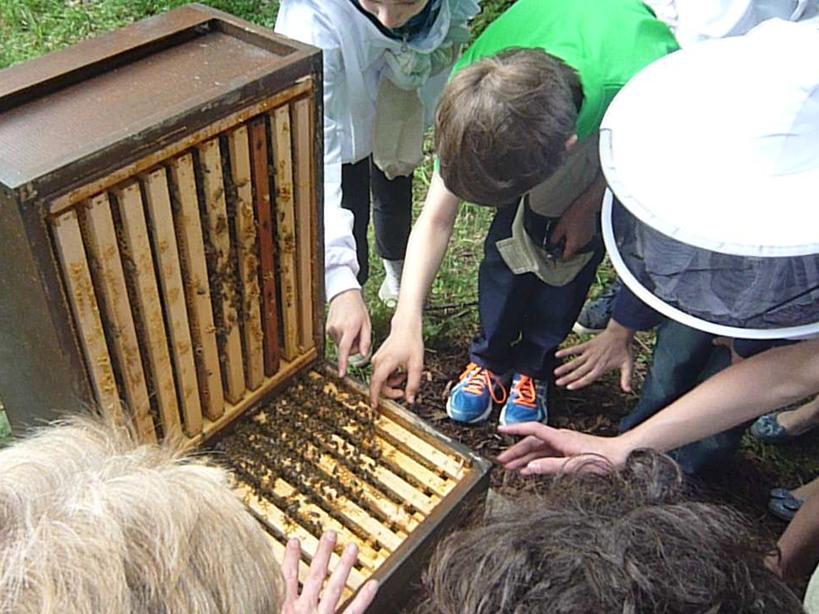 Geöffnete Bienenbeute