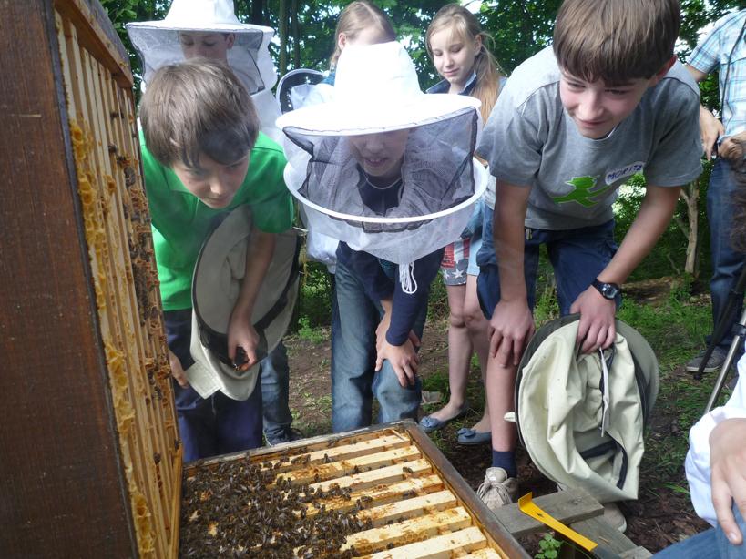 Schüler vor geöffneter Bienenbeute