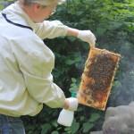 Reinhold sprüht die Bienen mit Milchsäure ein