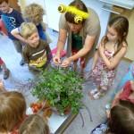 Kinder um Basilikumpflanze