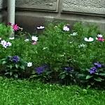 Blumenbeet Villa Dessauer