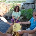 Carmen Dechant betrachtet ihr Bienenpatenvolk