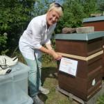 """Bienenpatin Sabine Gründler pinnt ihr Patenschild an """"ihre"""" Beute an."""