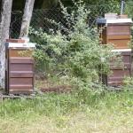 Unsere zwei Bienenbeuten in Wildensorg-Rinnersteig