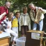 Gäste bestaunen eine Honigwabe