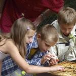 Hanna, Ben und Hendrik streicheln die Bienen an der offenen Beute