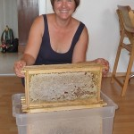 Ilona freut sich über die melezitosefreien Honigwaben