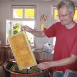 Reinhold versenkt eine entdeckelte Honigwabe in die Honigschleuder