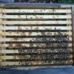 Blick in die Bienenbeute von Michael Burger