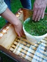 Zuckerwasserbehälter mit Gras als Krabbelhilfe