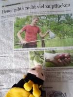 Die Schulbiene liest Zeitung