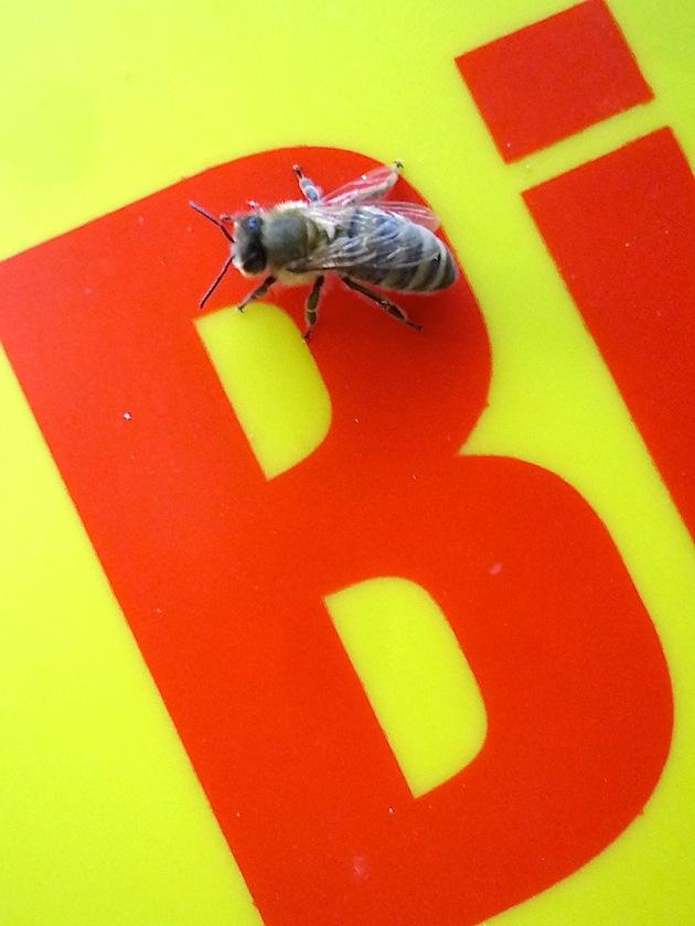 B wie Biene
