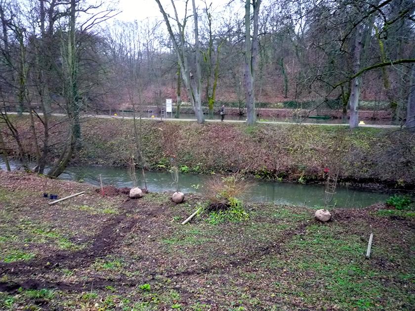 Salweiden warten am Hollergraben aufs Eingepflanztwerden