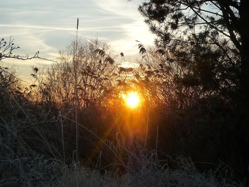 Winter in den Buger Wiesen