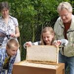 Kind zieht eine Honigwabe aus Beute