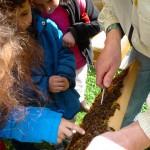Kinder streicheln Bienen