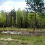 Im Eibacher Forst, Moortümpel