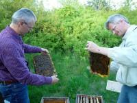 Nikolaus und Reinhold untersuchen vollbesetzte Rähmchen