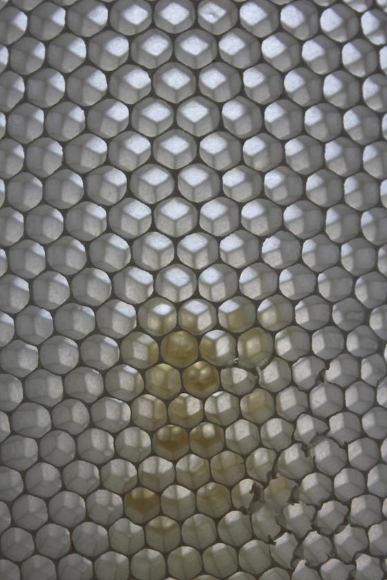 Detail Bienenwabe