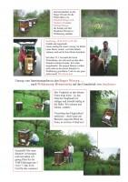 Geschichte eines Rück-Umzugs von Bienenvölkern