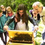 Schülerin der 8. Klasse zieht eine mit Bienen besetzte Wabe