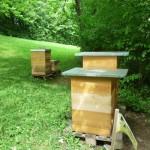 Vier Bienenbeuten am Kaiser-Heinrich-Gymnasium Bamberg