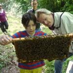 Edna beurteilt eine Bienenwabe
