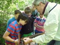 Schüler betrachten eine Wabe mit ansitzenden Bienen