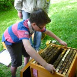 Moritz zieht eine Bienenwabe aus der Beute