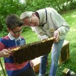 Moritz beurteilt eine Bienenwabe