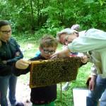 David beurteilt eine Bienenwabe