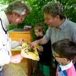 OStD Michael Strehler probiert Honig frisch aus der Wabe