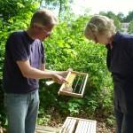 Reinhold zeigt Meike ein Wabenrähmchen