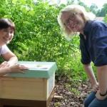 Anbringung des Bienenpatenschildes an der Beute