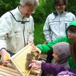 Bienenstreicheln