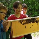 Schülerin hält Bienenrähmchen
