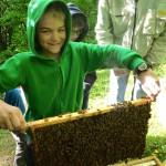 Schüler hält Bienenrähmchen