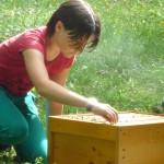 Schülerin streichelt Bienen