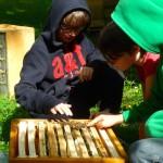 Schüler streicheln Bienen