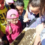 Kinder im direkten Streichelkontakt mit Bienen