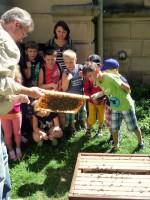 Kinder betrachten eine Bienenwabe am Lehrbienenstand der Villa Dessauer