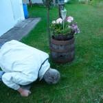 Reinhold schaut ins Spundloch eines von Bienen besetzten Bierfasses