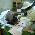 Ausräumen der Bienen aus dem Bierfass