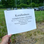 Frachtpflanzenbeschilderung am IBZV-Lehrbienenstand in Burgebrach