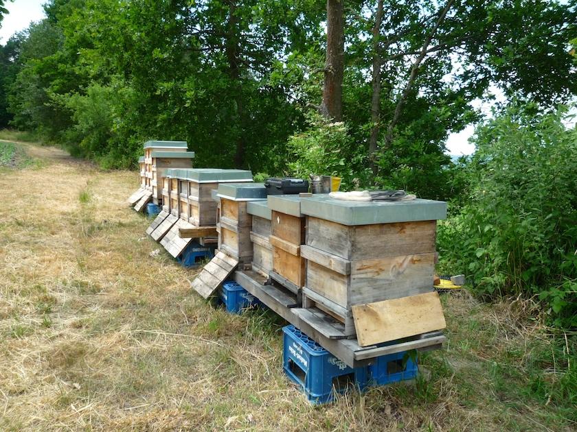 Bienenvölker am neuen IBZV-Lehrbienenstand Burgebrach