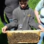 Simon hält Bienenwabe